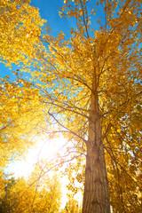 sol de otoños entre los arboles
