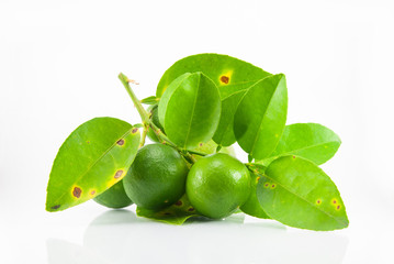 Group of fresh ripe lime with leaves.