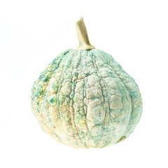 Green pumpkin on a white background.