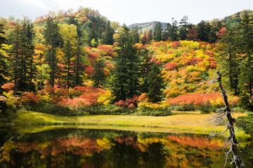 大雪山高原沼巡りコース滝見沼の紅葉
