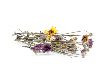 Dried flower, Dried chrysanthemum on white background.