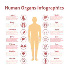 Human infographic set