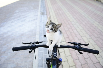 meraklı yavru kedi