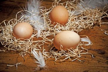 eggs from farm