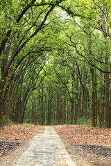 Beautiful path in the dense forest of Jim Corbett