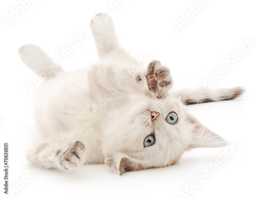 Kitten on a white background - 70636831