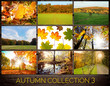 Autumn Collection 3
