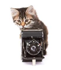 Little Kitten with photocamera