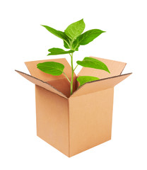 Growing green plant in a box
