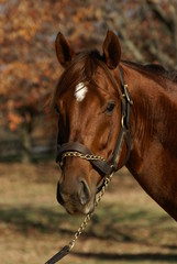 Flower Alley : Thoroughbred Stallion