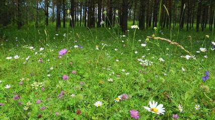 forest flowers in summer - slider dolly shot