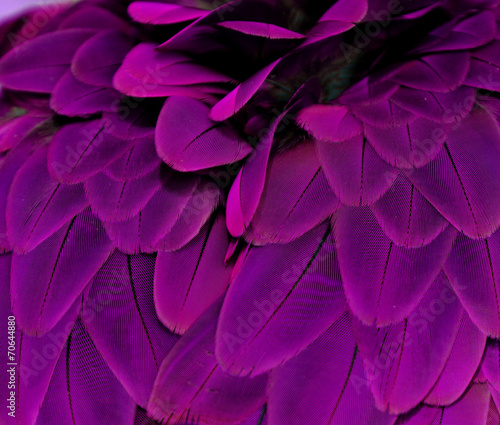 Deurstickers Vogel Feathers; Purple