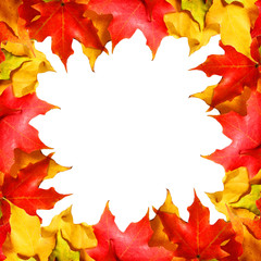 Maple leaves border with space. Colored autumn leafs isolated