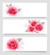 Obrazy na płótnie, fototapety, zdjęcia, fotoobrazy drukowane : Three banners with pink roses. Vector.