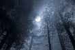 Forest full moon - 70649015