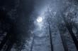 Forest full moon