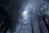 Fototapety Forest full moon