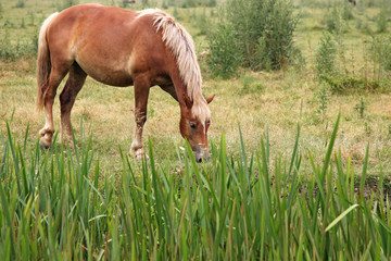 brown horse on field