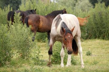 herd of horses on field