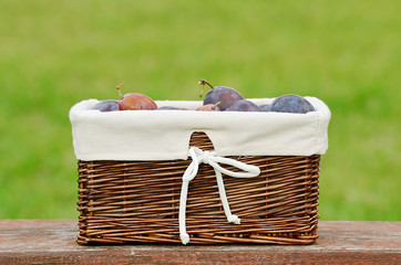 Fresh plum in basket after harvest
