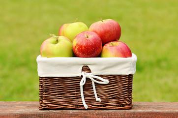 Fresh apples in basket after harvest in basket