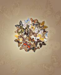Circle from butterflies