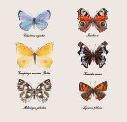 Set of butterflies. Russian buterflies.