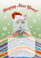 British blue cat. Christmas composition.