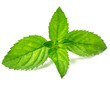 Fresh mint i