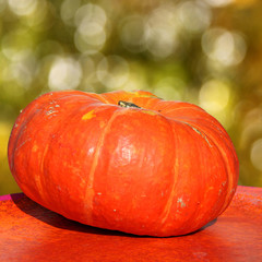 oranger riesenkürbis