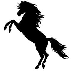 Black horse silhouette 13
