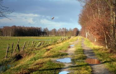 alter Handelsweg in Niedersachsen Pikerweg
