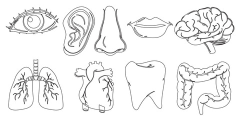 Doodle design of the different internal and external body parts