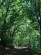 canvas print picture - Idyllischer Weg im Wald