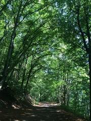 Idyllischer Weg im Wald