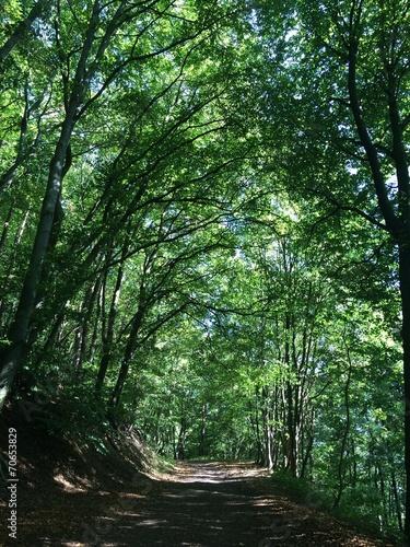canvas print picture Idyllischer Weg im Wald