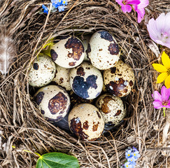 a nest with quail eggs - easter still life