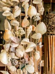 Seashell  string curtain