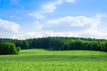 Kulturlandschaft -  junger, grüner Getreidebestand mit Wald