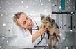Veterinarian checking dog with stethoscope