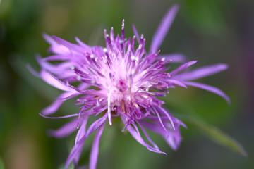 Close up of blue flower on flower field