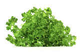 Fresh green branch of parsley isolated on white background