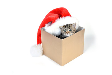 kitten with santa claus hat