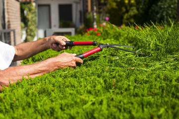 Man cutting hedges