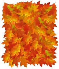 Oak colored autumn leaves