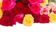 border of  multicolored  roses