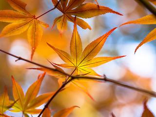 染まる紅葉