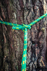 Rope tied on tree