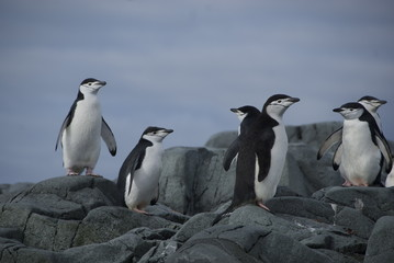 Penguins on the shore (Antarctic)