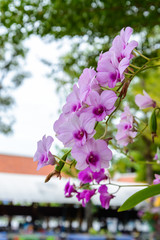 Bouquet of purple orchids
